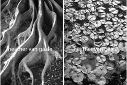 heather van gaale black and white erotic