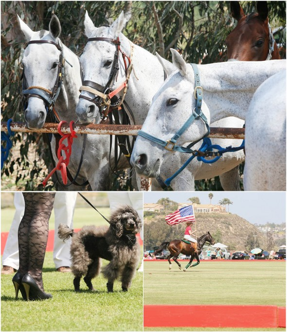 polo san diego opening day event photographer