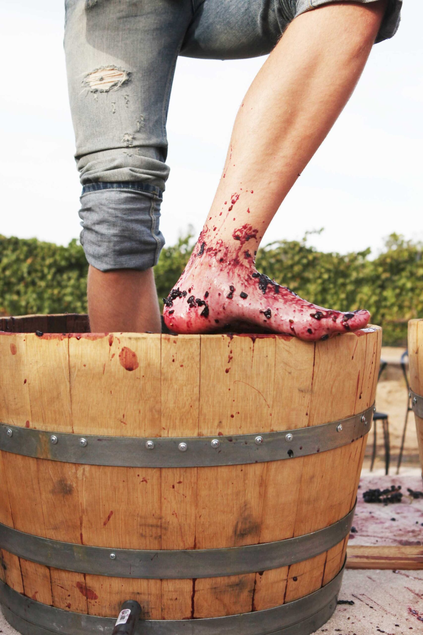 grape stomp,crush,harvest,wine photographer,california,blogger,artistic wine reviews,wine maker,